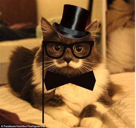 Hipster Cat Meme - the new grumpy cat hamilton the hipster cat becomes latest internet star daily mail online