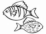 Fish Coloring Aquarium Pages Drawing Realistic Printable Ocean Bass Saltwater Cod Boat Getcolorings Tropical Colorings Re Getdrawings Clipartmag Easy sketch template