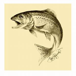 Rainbow trout on Pinterest | Rainbow Trout, Colored Pencil ...