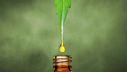 Cbd Oil Hemp Leaf Cannabis Extract Marijuana