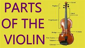 Parts Of The Violin And Bow - Carnatic Music Lessons