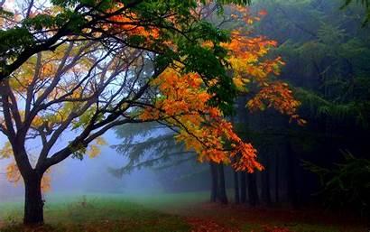 Desktop Autumn Wallpapers Fall Tree Header Nature