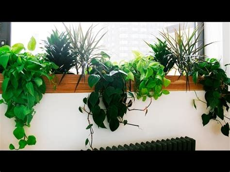 best small indoor plants low light best indoor plants for low light blumuh design