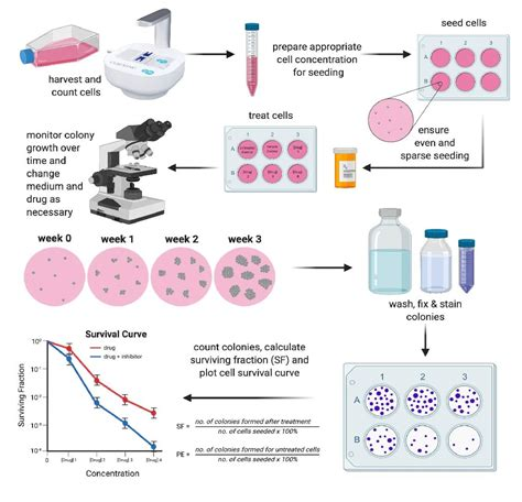 CytoSMART   Clonogenic assay: what, why and how