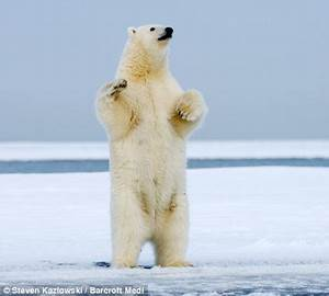 polar bear standing | Spooky and Sweet