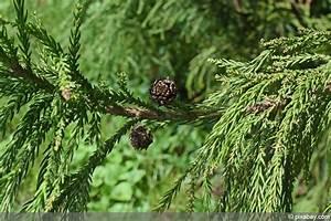 Leyland Zypresse Kaufen : ungiftige pflanzen f r hunde pflanzen f r nassen boden ~ Frokenaadalensverden.com Haus und Dekorationen