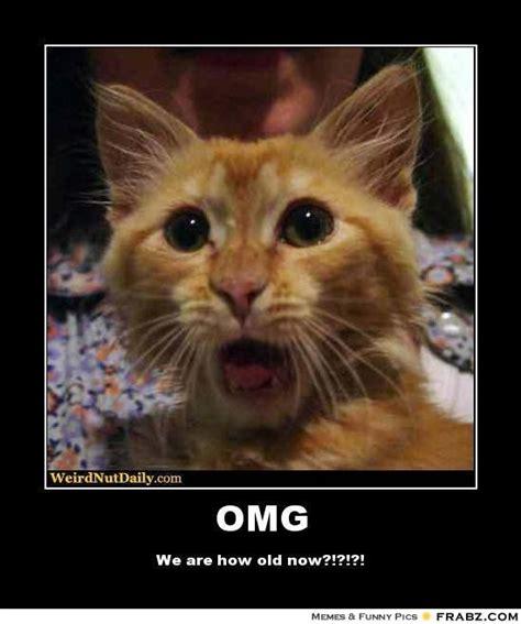 Omg Memes - omg wtf cat meme