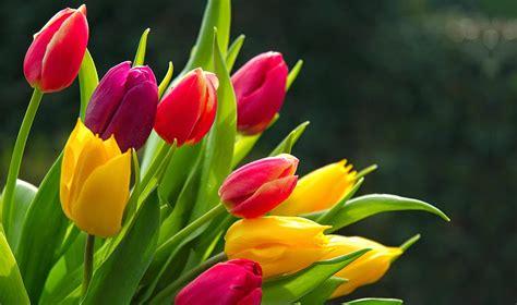 beautiful flowers hd poze rase de pisici apartament