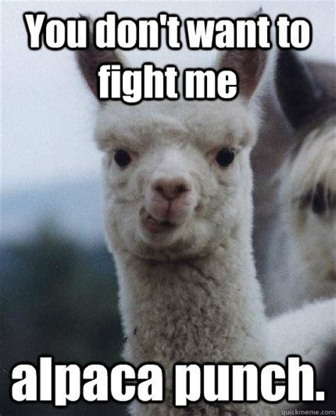Alpaca Meme 28 Best Images About Alpaca Memes On Animal