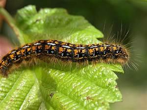 The  U0026 39 Word Thoughts U0026 39  Blog  Caterpillar