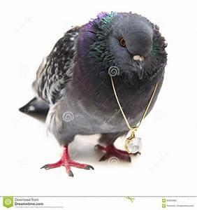 Decorative Bird With Large Beak Vector Illustration ...