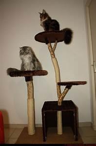Arbre A Chat Solide : vends arbre chat en bois naturel ~ Mglfilm.com Idées de Décoration