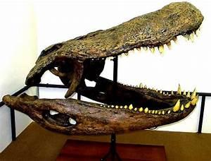 Purussaurus and crocodylian recursiveness | mAnasa-taraMgiNI