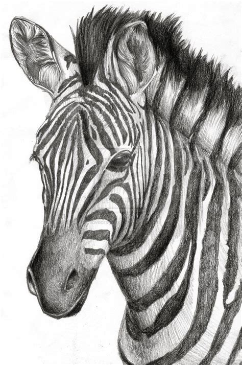 zebra images  pinterest zebras zebra cartoon