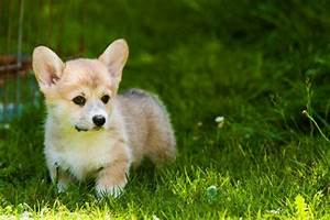 9 of the Cutest Small Dog Breeds | PetHelpful