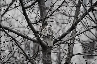 Birds Trees Monochrome Backgrounds Wallup