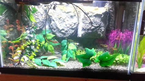 Diy Aquarium Background 10 Gallon Aquarium W Diy Background