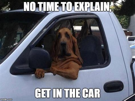 Dog In Car Meme - dog in truck imgflip