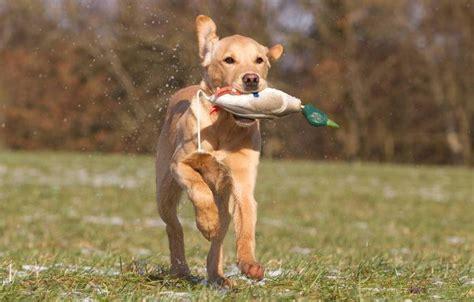 apportieren hunde agila