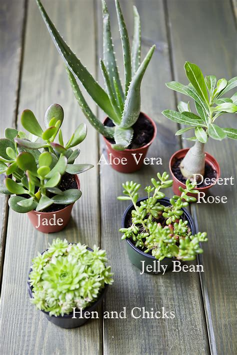 succulents nursery celebrate creativity