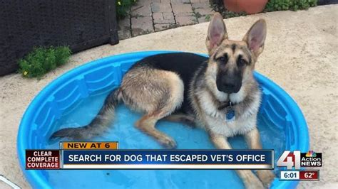 local man frustrated  dog escapes  vet
