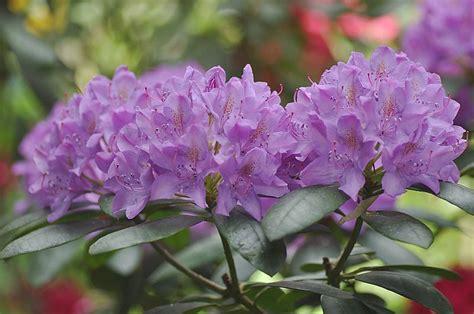 Strona główna Blox.pl | Rhododendron, Plants