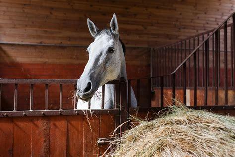 durchfall beim pferd risiko fuer folgeerkrankungen