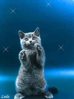kumpulan gambar kucing lucu bergerak gif terbaru