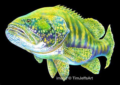 grouper goliath tim jeffs colored 11x17 pencil paper