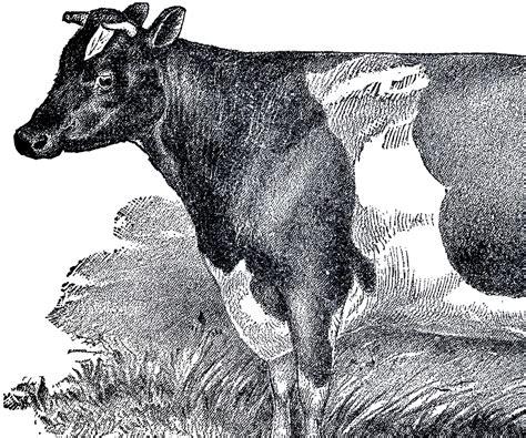 Vintage Farmhouse Images by Vintage Farmhouse Image Cow The Graphics