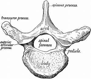 Anatomy Of A Steak