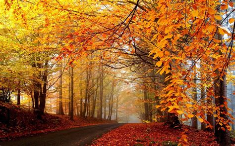 Fall Backgrounds For cool fall backgrounds wallpaper cave