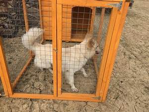 dog run kennel for sale in uk 44 used dog run kennels With dog runs for sale