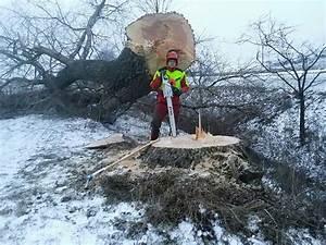 Was Kostet Baum Fällen : schl gerungen baum abtragen baumentfernung rodung baum f llen 49 1140 wien ~ Orissabook.com Haus und Dekorationen