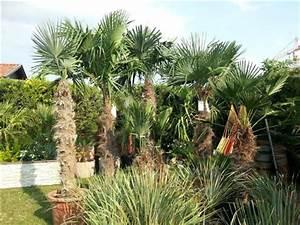 Palmen Kaufen Baumarkt : palmen kaufen tessin granitplatten innenbereich ~ Orissabook.com Haus und Dekorationen