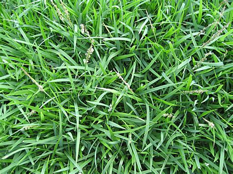 Common Grass Types For Lawns In St. Louis, Mo