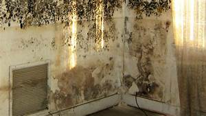 How to remove mold from walls housewife how to39sr for How to get mould off bathroom walls