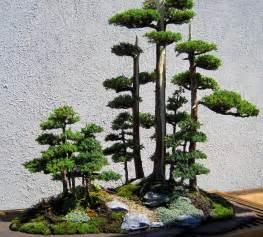 bonsai design bonsai tree table decoration room decorating ideas home decorating ideas