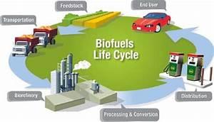 Biofuels - Alternative Energy