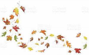 Autumn Maple And Oak Leaves Blowing In The Wind stock ...