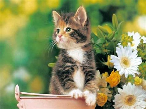 Free Animated Cat Wallpaper - free cat wallpaper and screensavers wallpapersafari