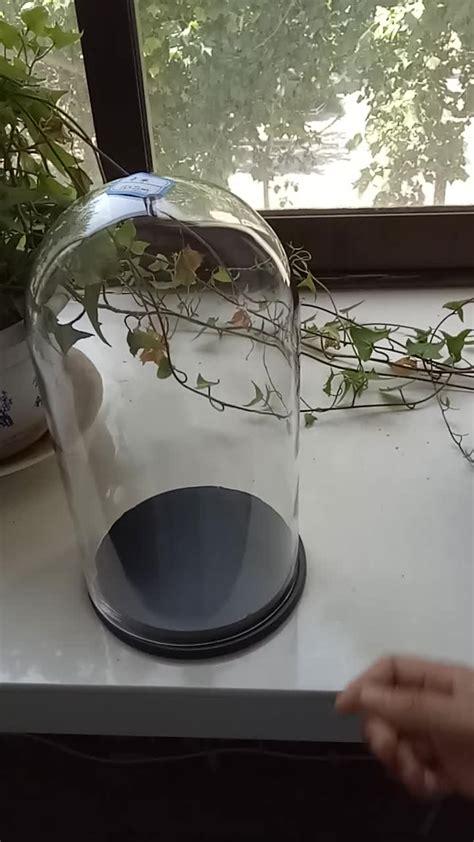 cupole in vetro trasparente cana vasetti cupole di vetro all ingrosso