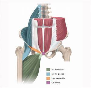Four Musculoskeletal Structures Where Athletic Groin Pain