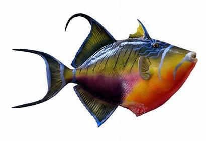 Fish Colorful Clipart Transparent Marine Reef Underwater