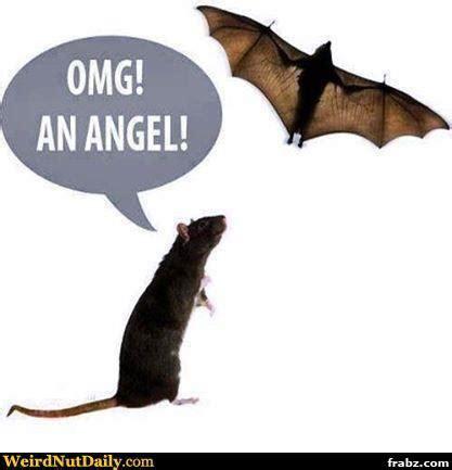 Angel Memes - rat angel meme generator captionator caption generator frabz lmao zoo animals pinterest