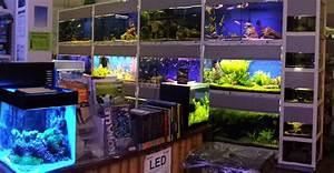 Süßwasserfische Fürs Aquarium : verkaufs schauaquarien aquarium aquaristik center ost ~ Lizthompson.info Haus und Dekorationen