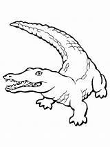 Coloring Crocodile Printable sketch template