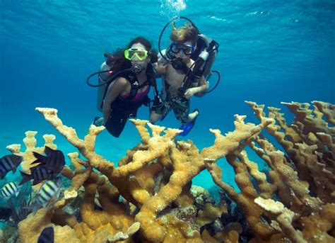 Cozumel Dive Discover Scuba Diving In Cozumel Cozumel Cruise Excursions