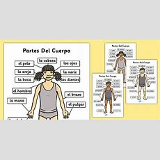 Partes Del Cuerpo A4 Spanish  Spanish, Parts, Body, A4, Body