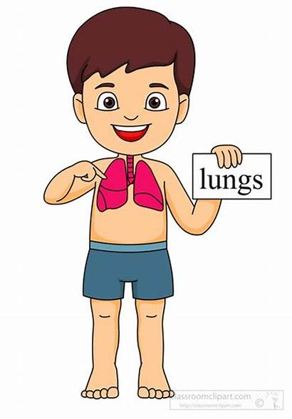 Lungs Clipart Anatomy Boy Lung Human Respiratory